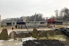 Führanlage für 4 Pferde